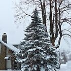 Snowy Tree by Susan S. Kline