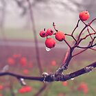 Autumn Berries In The Fog 2 by Jessica Reilly