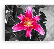 Flaming With Shades of Pink  Canvas Print