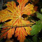 Leaf by KirstyJSwinger