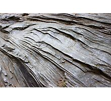 Wrinkled Bark on a Fallen Tree  Photographic Print