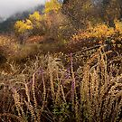 Green Mountain Dawn by John Poon