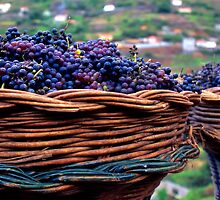 Madeira Grapes by Pablo Romero