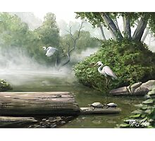 Crane Flight : A Nature Painting  Photographic Print