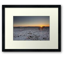 glowing horse Framed Print