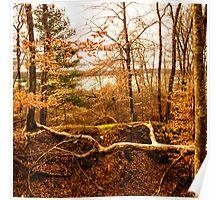 Late Winter Ryder Conservation Land Poster