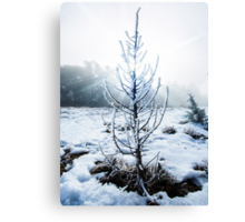 Real Snowy Christmas Tree Canvas Print