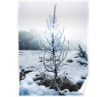 Real Snowy Christmas Tree Poster