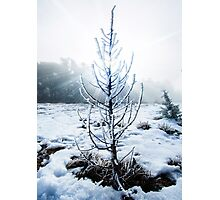 Real Snowy Christmas Tree Photographic Print
