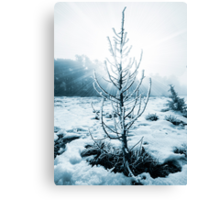 Real Christmas tree with snow Canvas Print