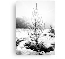 Real Christmas Tree in Black and White Canvas Print
