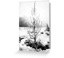Real Christmas Tree in Black and White Greeting Card