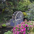 Centennial Waterwheel  Christchurch New Zealand by Doug Cliff