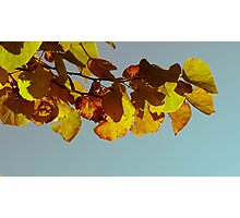 Retro Redbud in Fall Photographic Print