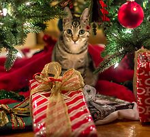 A Little Present Under The Tree by Mikell Herrick