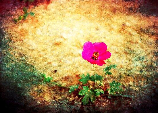 Earth Laughs in Flowers... by Denis Marsili - DDTK