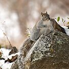 Winter Squirrel by K D Graves Photography