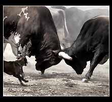 Rodeo Bulls, Caution. by Barbara  Jean