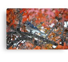 Blue jay, Red tree Canvas Print