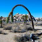 A Joshua Tree Arch by philw