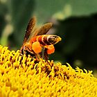 Bee Butt by Ikramul Fasih