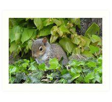 Baby Squirrel 1 Art Print