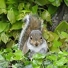 Baby Squirrel 2 by shiro