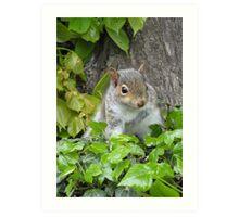 Baby Squirrel 3 Art Print