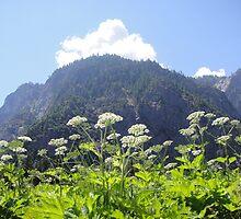 Yosemite peaking by Pamnani  Photography