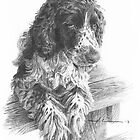 Springer spaniel drawing by Mike Theuer