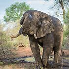 Bull elephant by J. Day