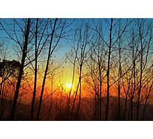 Intense trees silhouette Photographic Print