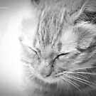 Kitty :) by Vandana Indramohan