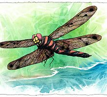 Dragonfly Notes by Bart Castle