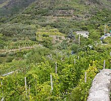 Cinque Terre Vineyards by Andrea  Muzzini