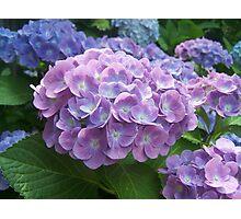 Beautiful Flowers in Garden Photographic Print