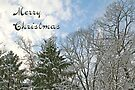 Merry Christmas Card - Snow and Evergreens by MotherNature