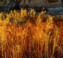 Flaming Grass by BGSPhoto