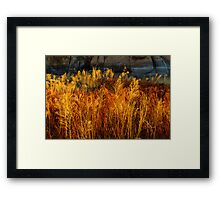 Flaming Grass Framed Print