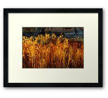 Flaming Grass Framed Print