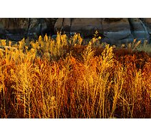 Flaming Grass Photographic Print