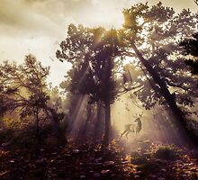 Mysterious Sun Rays Shining Down by Jerome Obille