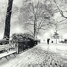 Winter Night - Madison Square Park - New York City by Vivienne Gucwa