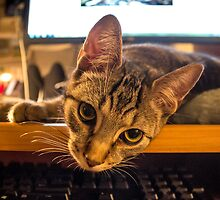 Hard to Get Any Work Done Sometimes by Mikell Herrick