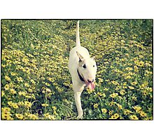 Bully and Flowers Photographic Print