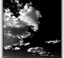 ©HCS Walk On The Wild Side LRT Monochromatic F by OmarHernandez