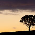 Ridgetop Tree by Will Hore-Lacy