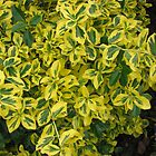 Pretty Bush with Green and Gold Leaves by BlueMoonRose