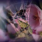 Entangled by Lozzar Flowers & Art