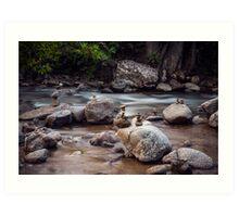 Boulder Creek Balancing Act Art Print